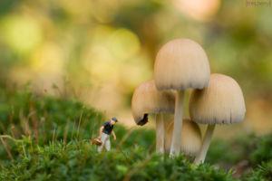 Miniatur Fotografie - Pilzsammler