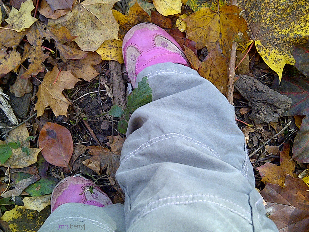 Zickenfoto vom Herbstspaziergang