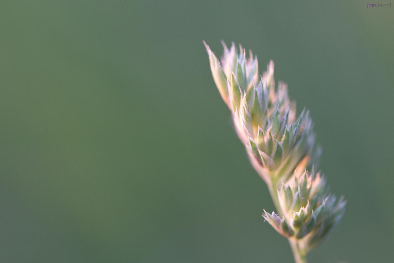 Gräser Macro