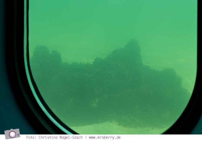 Tauchgondel in Grömitz: Unterwasser Ausblick