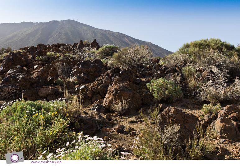 Wanderung durch den Teide National Park