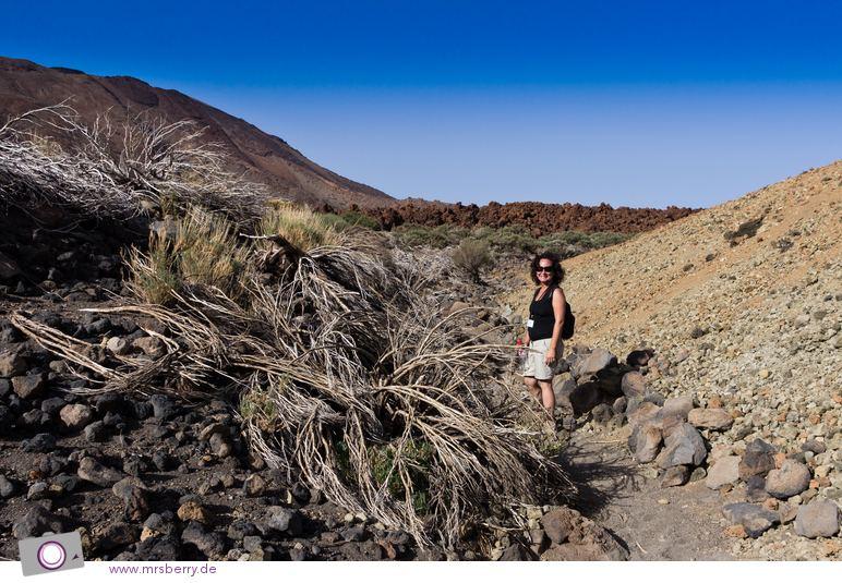 Wanderung durch den Teide National Park - mit Lola von Gaiatours.com