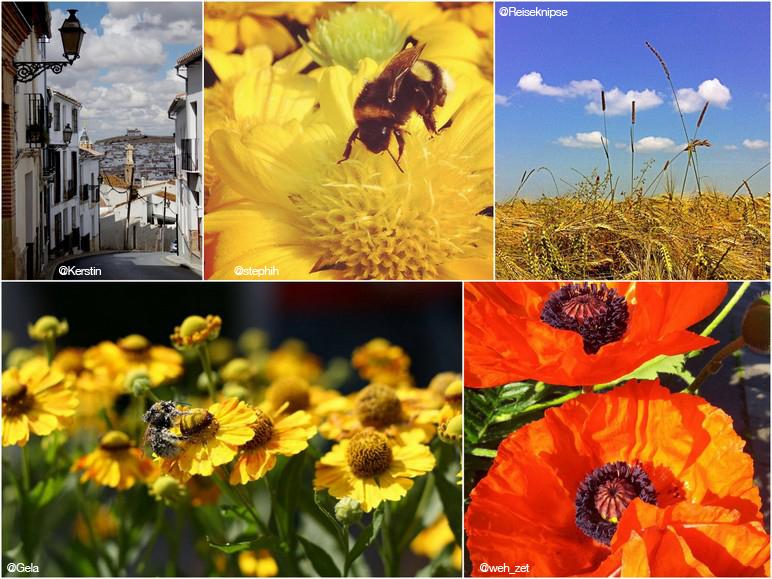 Finalisten des MrsBerry & CEWE Sommer Fotowettbewerb 2013
