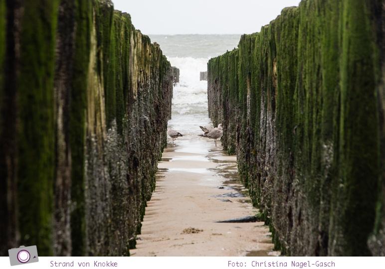 Urlaub in Belgien: Der Strand von Knokke