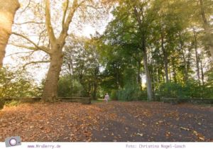 MrsBerry Jahresrückblick 2013: Köln im Herbst - im Stadtwald