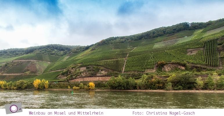 Weinbau an Mosel und Mittelrhein