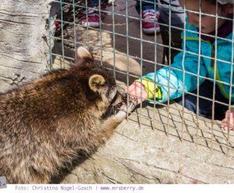Erlebnis-Zoo Arche Noah in Grömitz an der Ostsee