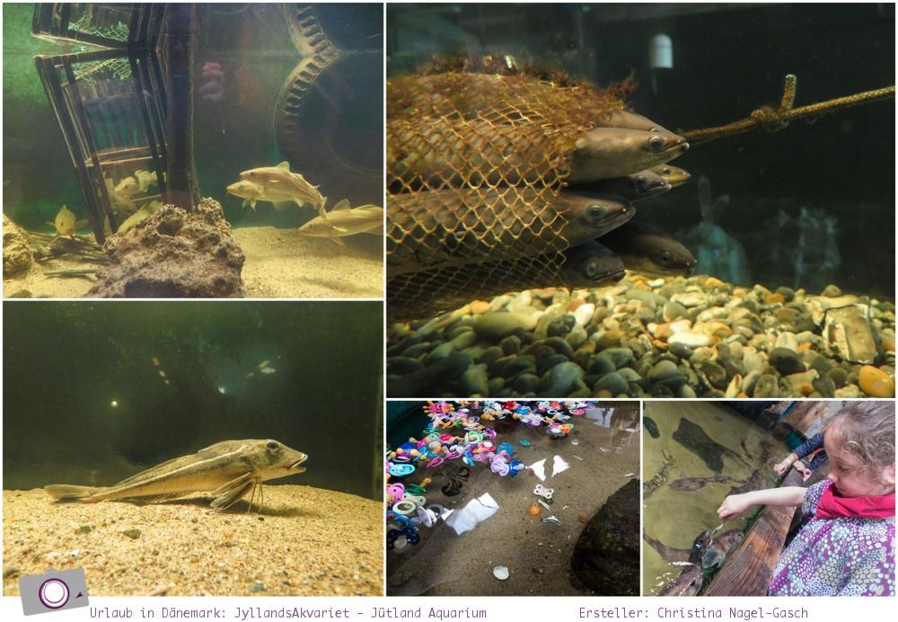 Urlaub in Dänemark: Tipps für den Limfjord - JyllandsAkvariet - Jütland Aquarium