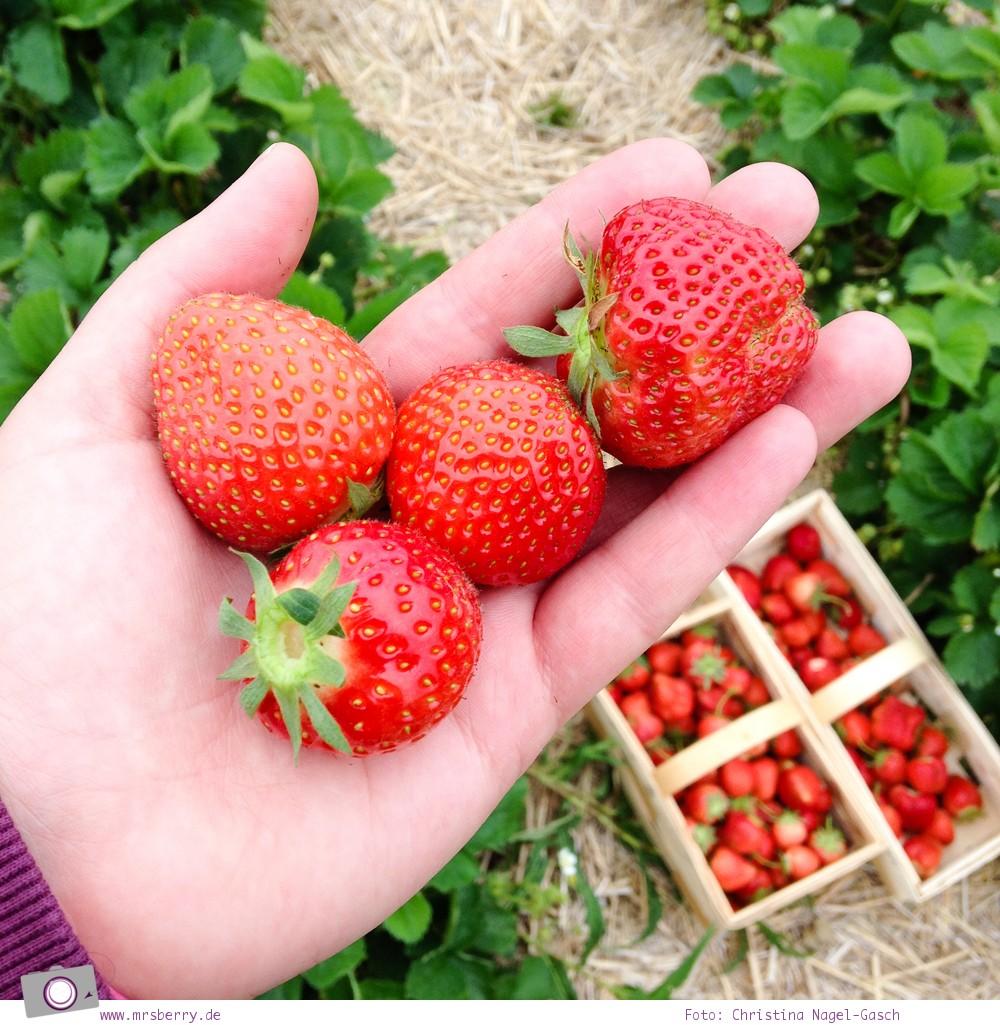 Reisefit: frische Erdbeeren vom Feld - statt Süßigkeiten
