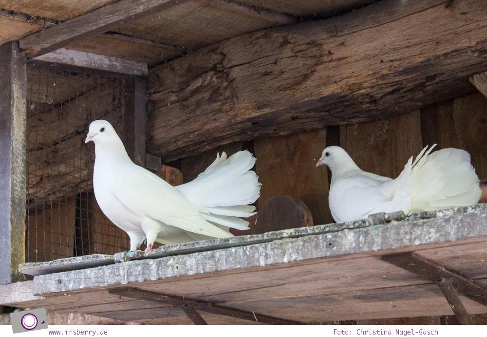 Ferien im Emsland: Tierpark Nordhorn - weiße Tauben