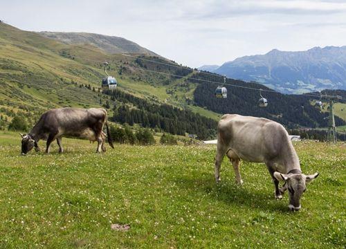 Unser Sommerurlaub 2014 – Wandern, Berge und vieles mehr