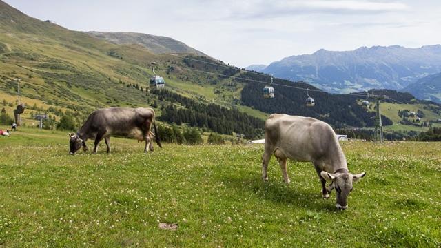 Panorama-Genuss-Wanderweg in Serfaus, Tirol