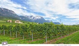 Weinanbau am Kalterer See in Südtirol