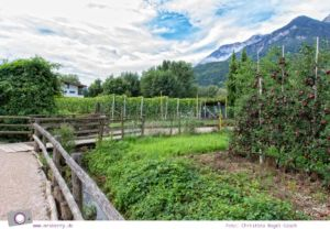 Apfelplantagen am Kalterer See in Südtirol