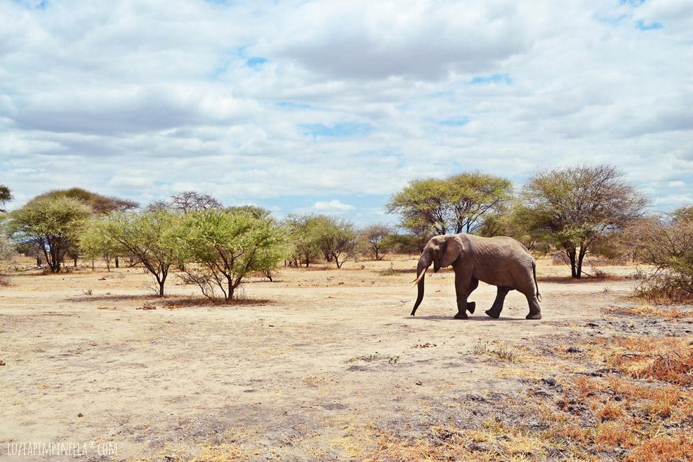 Die schönsten Reiseziele 2015 - Bloggers Choice: mit Luzia Pimpinella nach Tansania