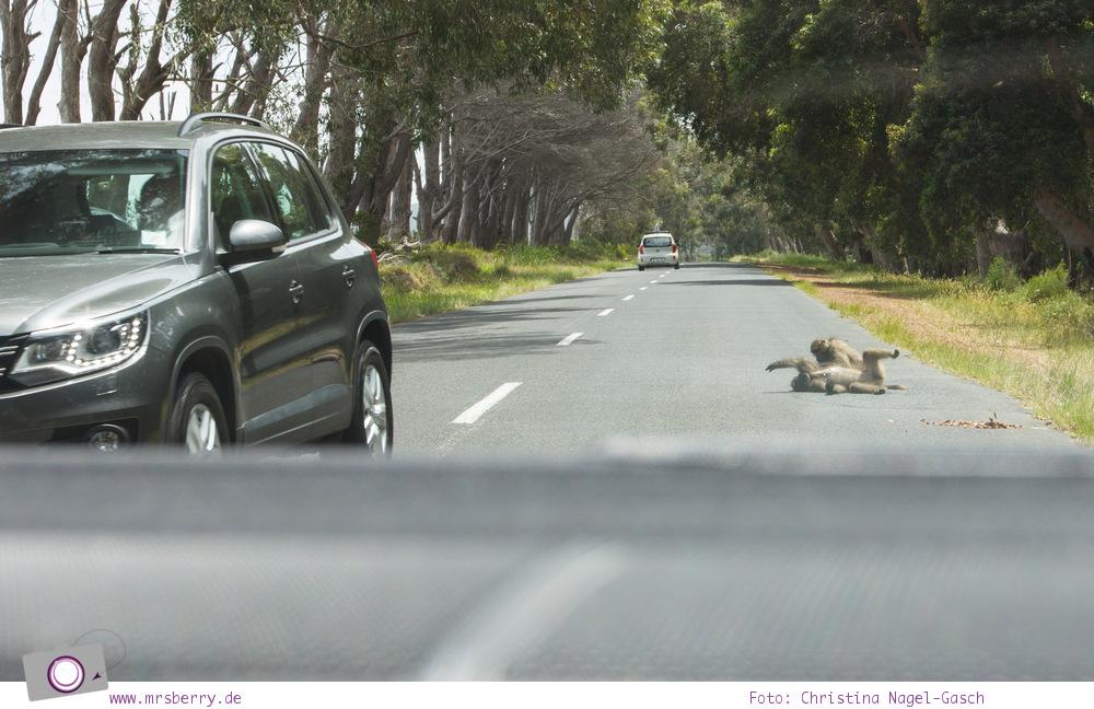 Südafrika: Baboons
