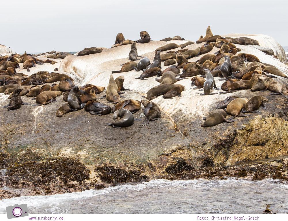 Südafrika: Pelzrobben Kolonie auf Duiker Island
