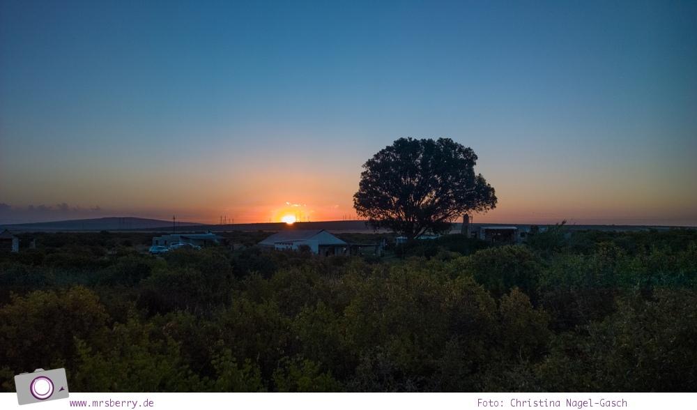 Südafrika Westkap - die Thali Thali Game Lodge