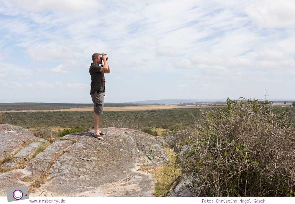 Südafrika Westkap - die Thali Thali Game Lodge - Thys auf der uche nach den Giraffen
