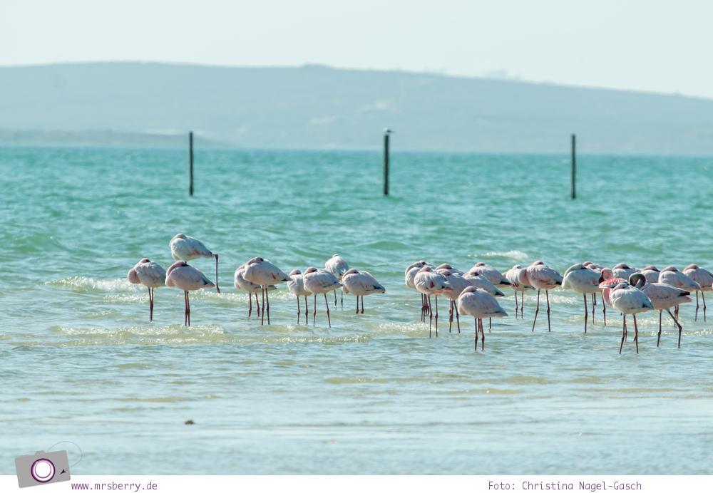 Südafrika (Western Cape):Wilde Flamingos an der Langebaan-Lagune im West Coast National Park