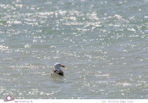 Südafrika (Western Cape): Langebaan-Lagune im West Coast National Park