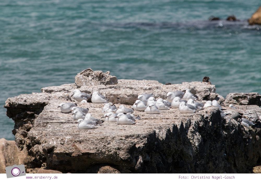 Südafrika: die Pinguine bei Stony Point, Betty's Bay