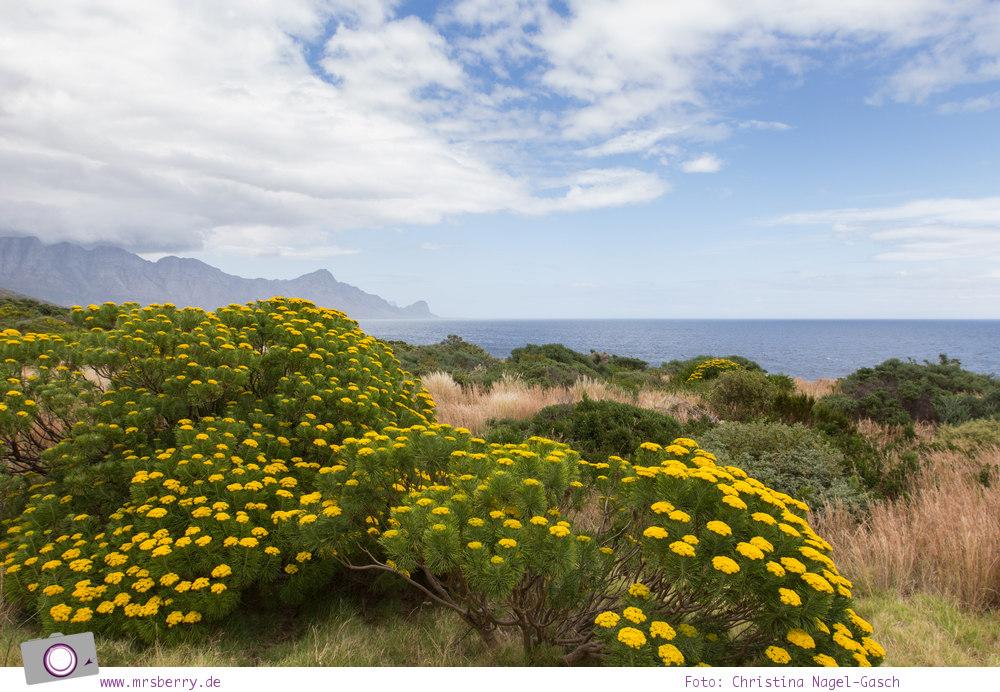 Südafrika: Panoramastrasse Clarence Drive
