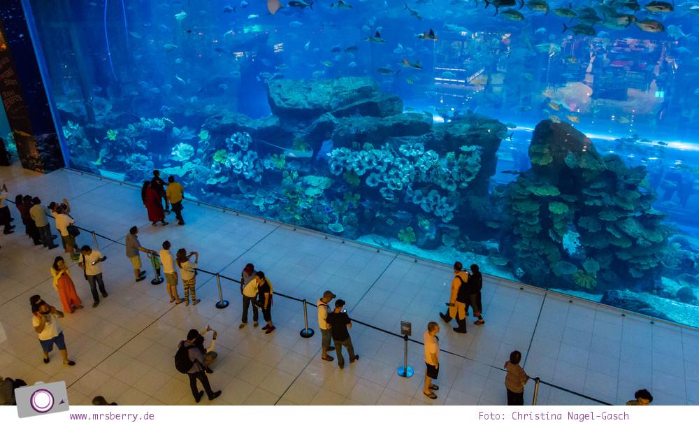 Dubai Reisetipps: Dubai Aquarium in der Dubai Mall