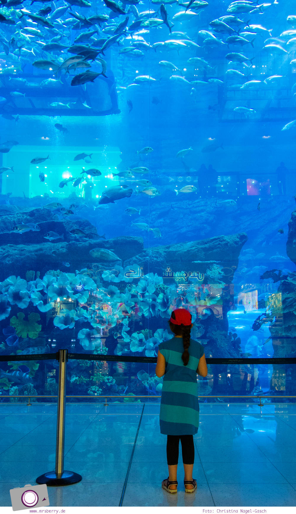 Fernreisen - Dubai mit Kind: Dubai Aquarium mit der größten Frontscheibe eines Aquariums