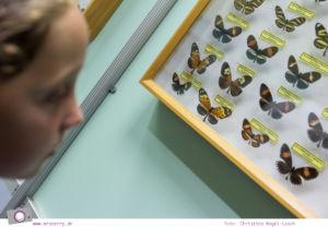 Usedom - Ausflüge für Familien und Kinder: die Schmetterlingsfarm in Trassenheide
