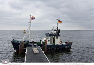 Usedom - Ausflüge für Familien und Kinder: eine Seetierfangfahrt mit dem Kutter