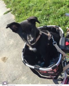 Familienzuwachs beim MrsBerry Familien- & Reiseblog : Hund Maya