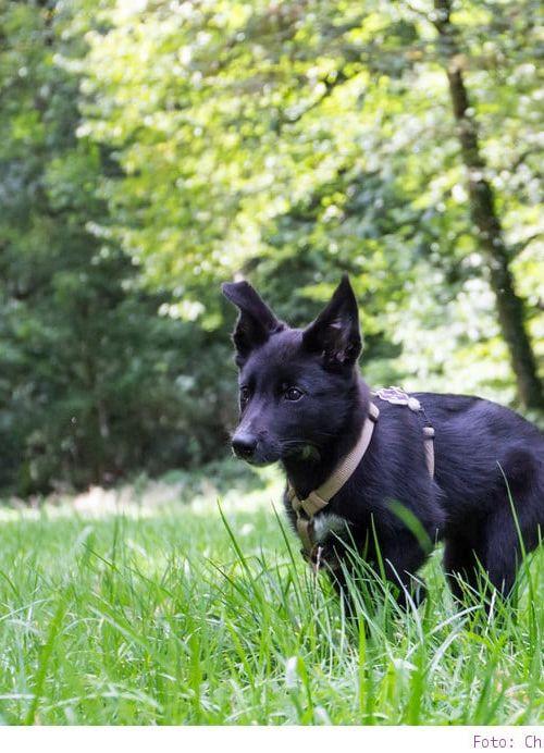 Familienzuwachs bei MrsBerry – oder – auf den Hund gekommen