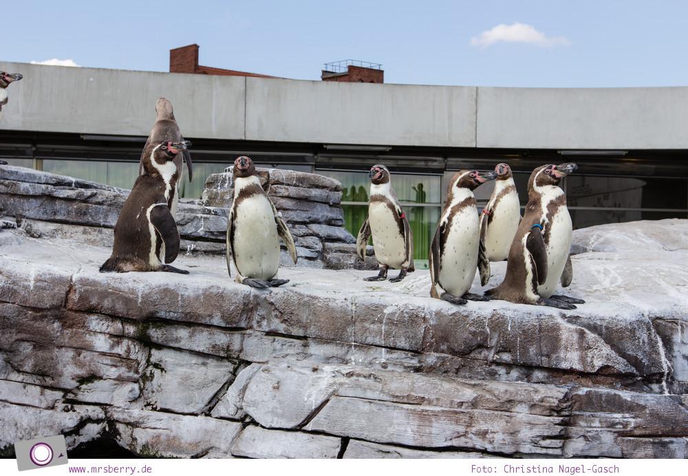 Ozeaneum in Stralsund: Humboldt Pinguine