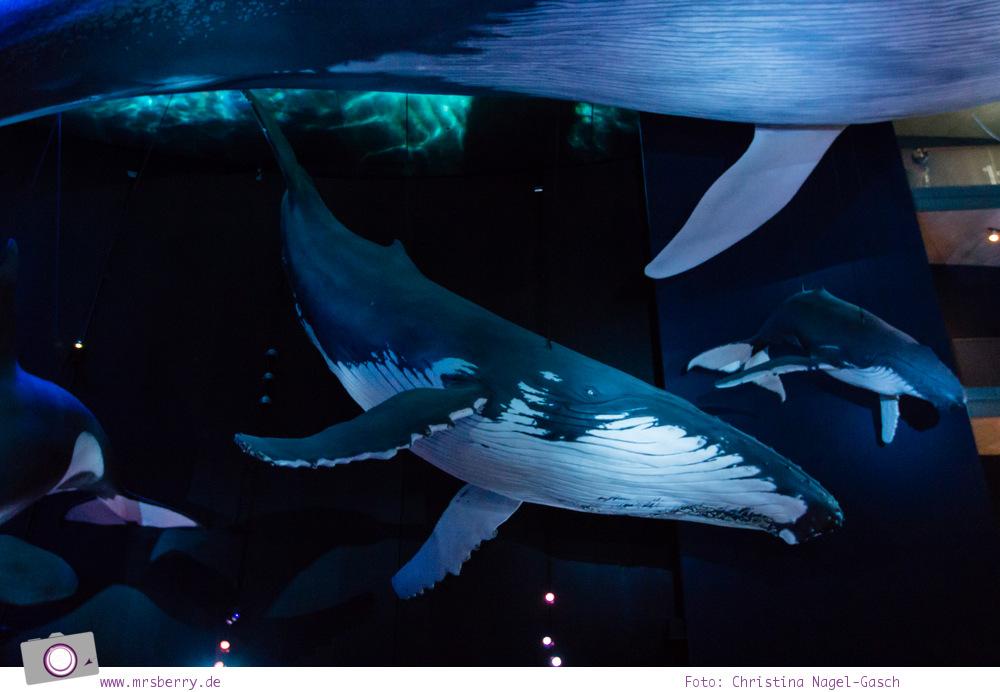 Ozeaneum in Stralsund: Riesen der Meere