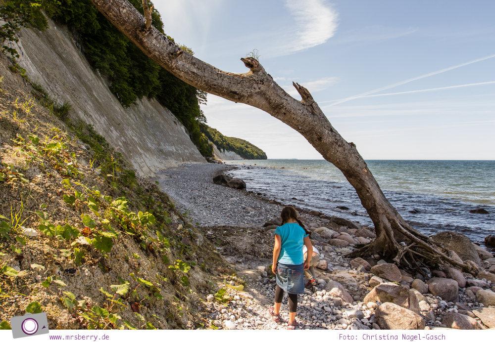Rügen erleben: Am Strand/Fusse des Königsstuhl - Hühnergötter sammeln
