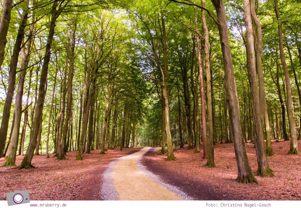 Rügen erleben: UNESCO Weltnaturerbe Buchenwälder im Nationalpark Jasmund