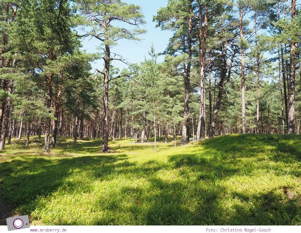 Urlaub an der Ostsee - 4 Tage in Zingst: Ausflug zum Leuchtturm Darßer Ort
