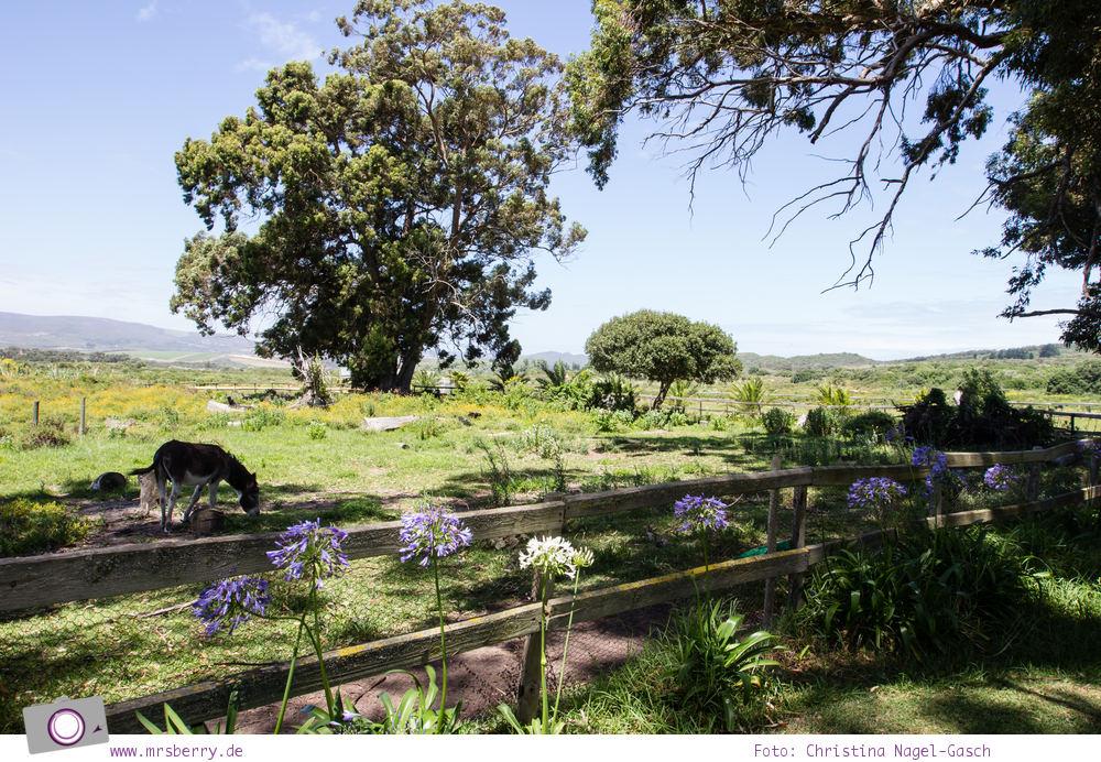 Südafrika #9: Quad Biking Ausflug vom Grootbos Private Nature Reserve