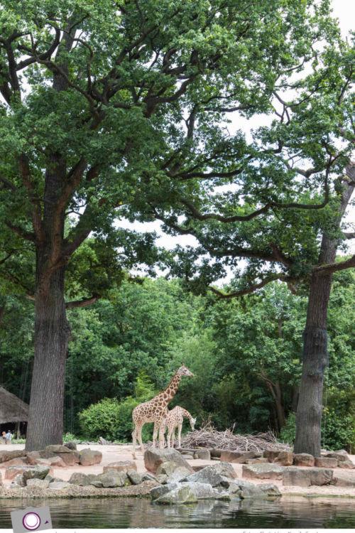 Erlebnis-Zoo Hannover: meine Top 5 +1 Attraktionen