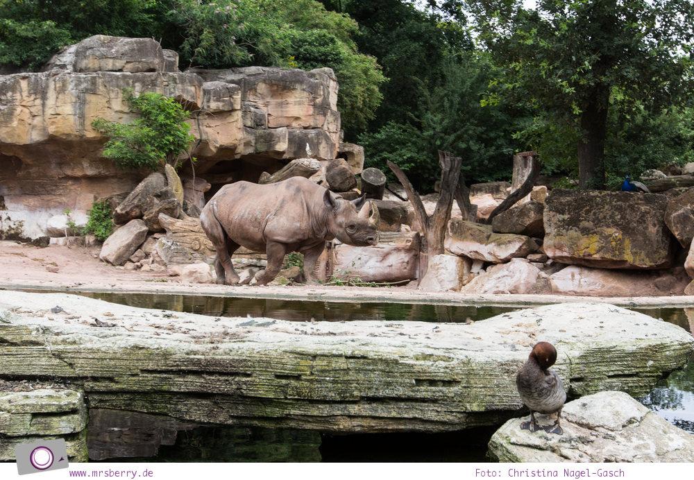 Erlebnis-Zoo Hannover: MrsBerry's Top 5 + 1 Attraktionen - Sambesi Themenwelt mit Spitzmaulnashorn