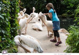 Erlebnis-Zoo Hannover: MrsBerry's Top 5 + 1 Attraktionen - Sambesi Themenwelt mit Rosapelikanen