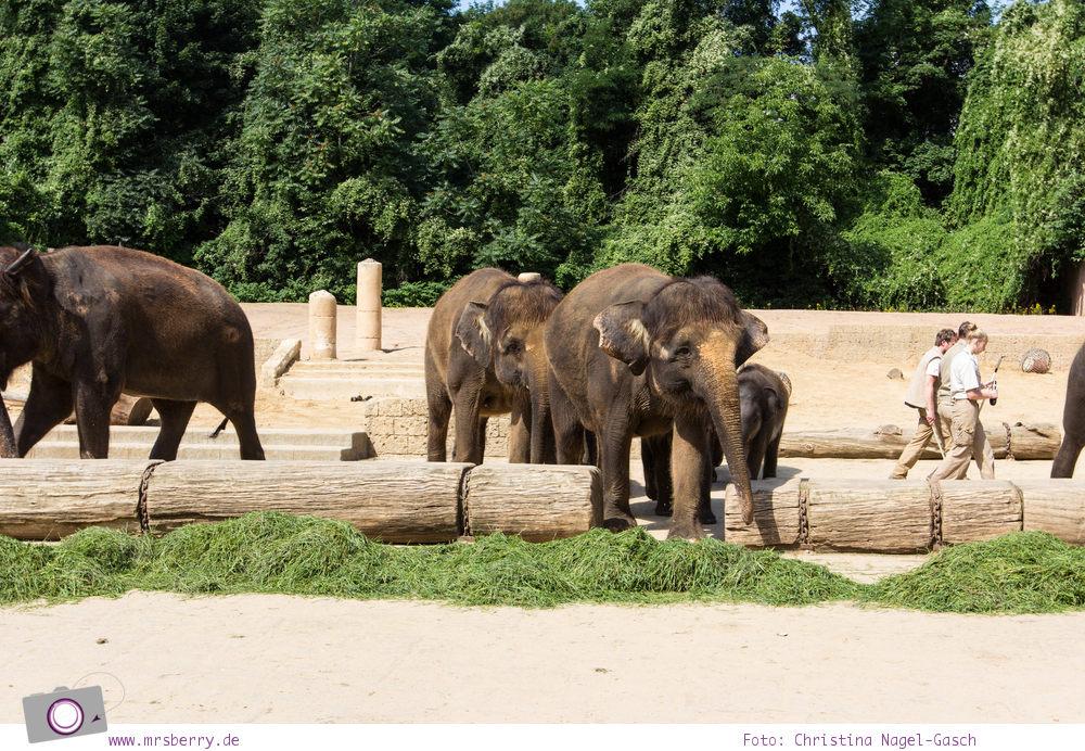 Erlebnis-Zoo Hannover: MrsBerry's Top 5 + 1 Attraktionen - Dschungelpalast Themenwelt mit Asiatischen Elefanten