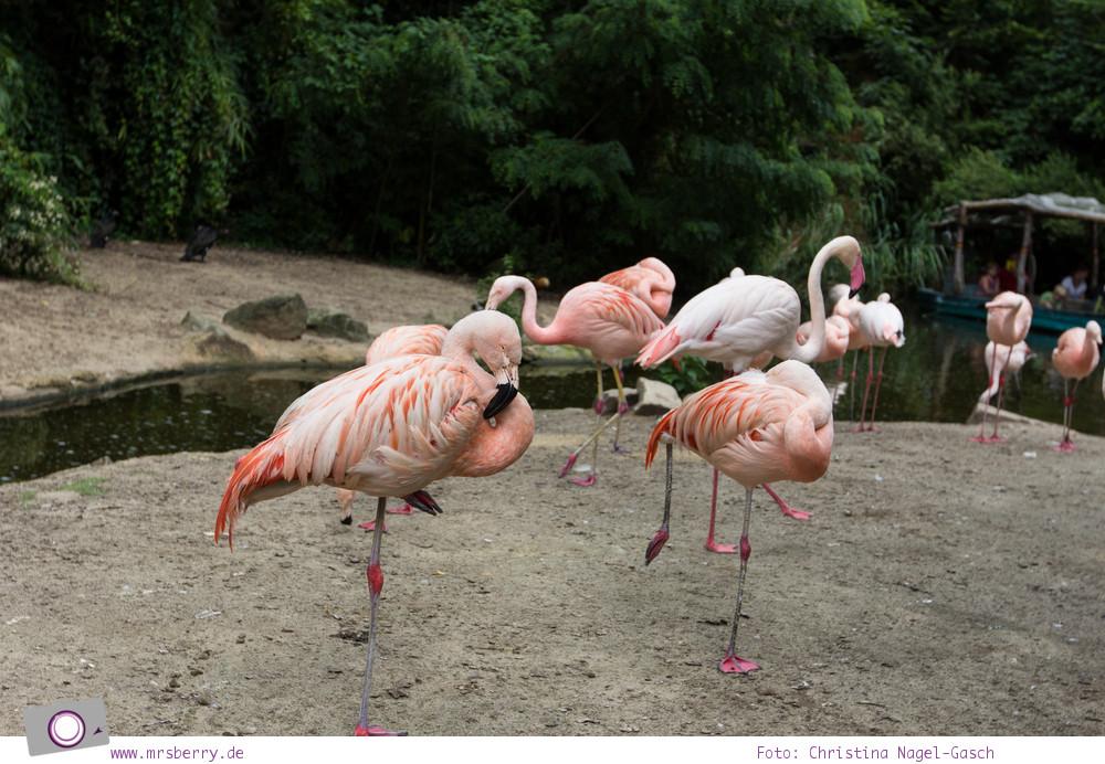 Erlebnis-Zoo Hannover: MrsBerry's Top 5 + 1 Attraktionen - Sambesi Themenwelt mit Flamingos