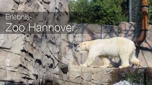Erlebnis-Zoo Hannover: MrsBerry's Top 5 + 1 Attraktionen - Yukon Bay Themenwelt
