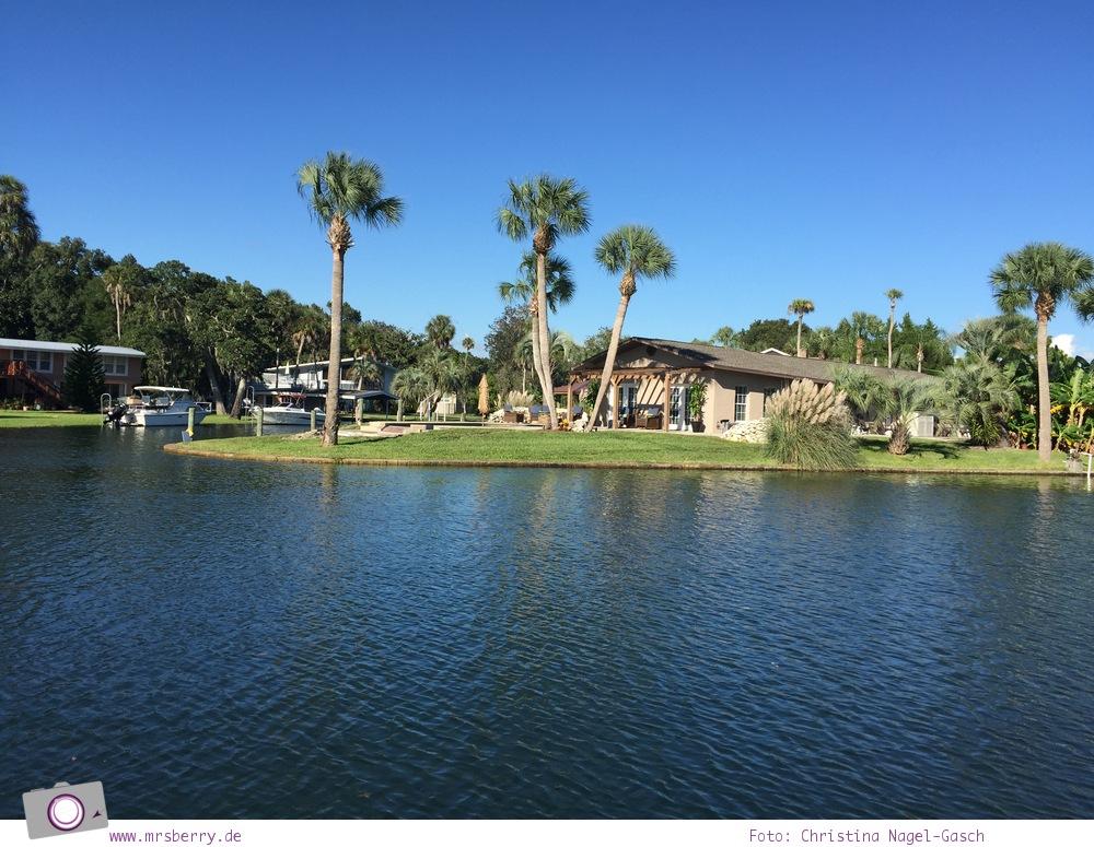 Florida Rundreise: Kings Bay in Crystal River - Zuhause der Seekühe