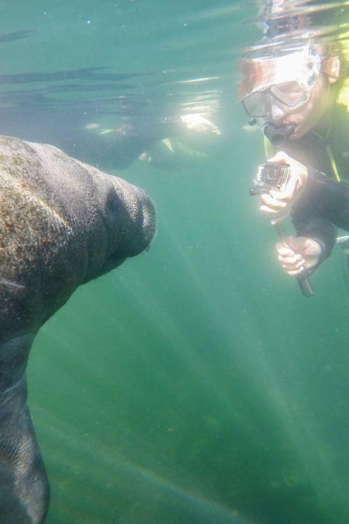 Florida #3: Schwimmen mit Seekühen – Crystal River