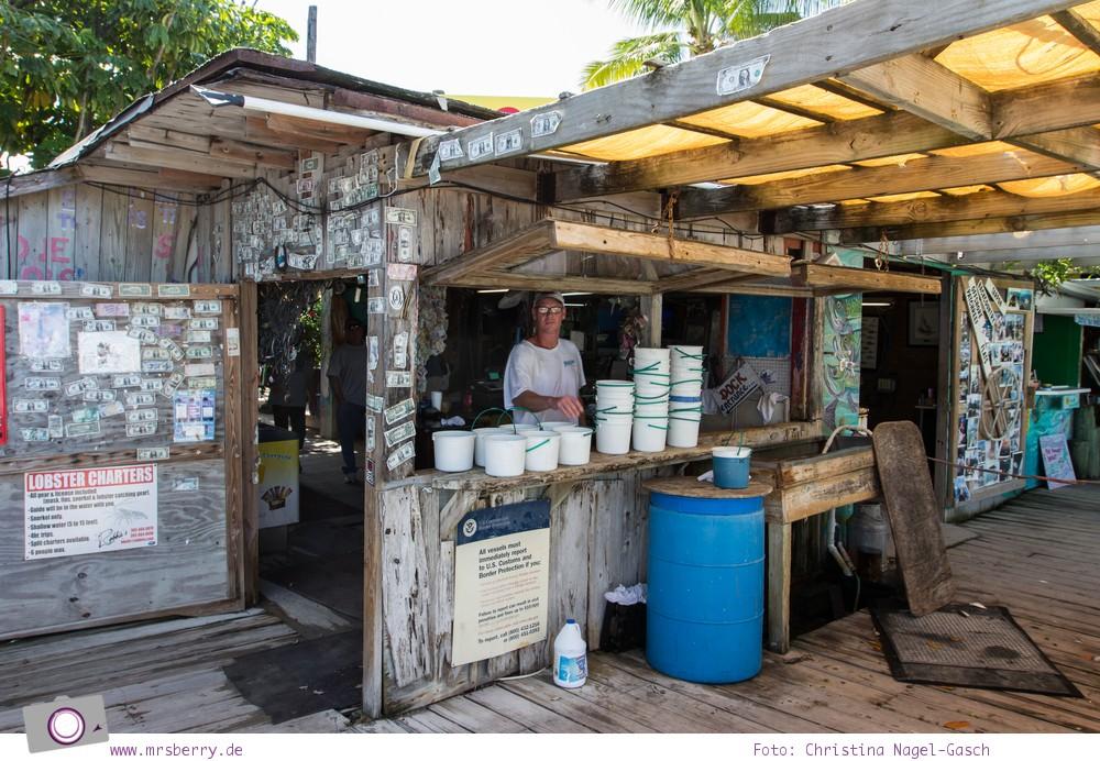 Florida Rundreise: Tarpune füttern in Robbies Marina bei Islamorada (Florida Keys)