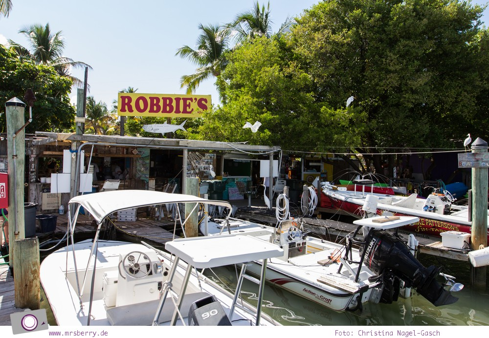 Florida Rundreise: Tarpune füttern in Robbies Marina bei Islamorada (Florida Keys)