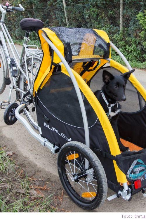 Fahrradfahren mit Hund – der Hundeanhänger von Burley
